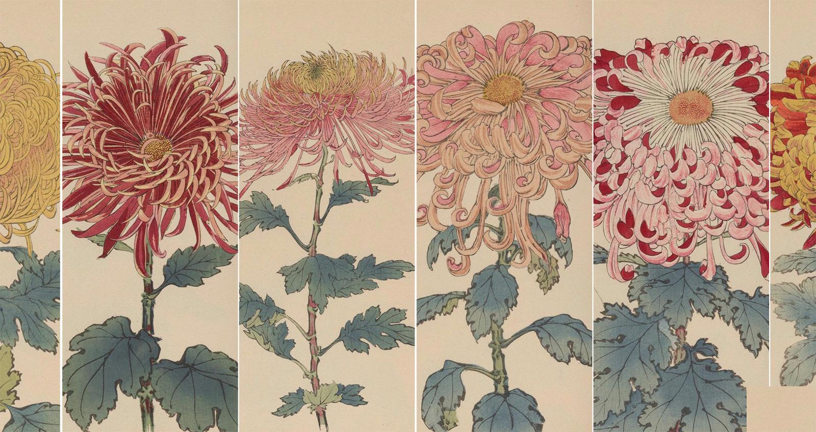菊 の ニュース 皇室 紋