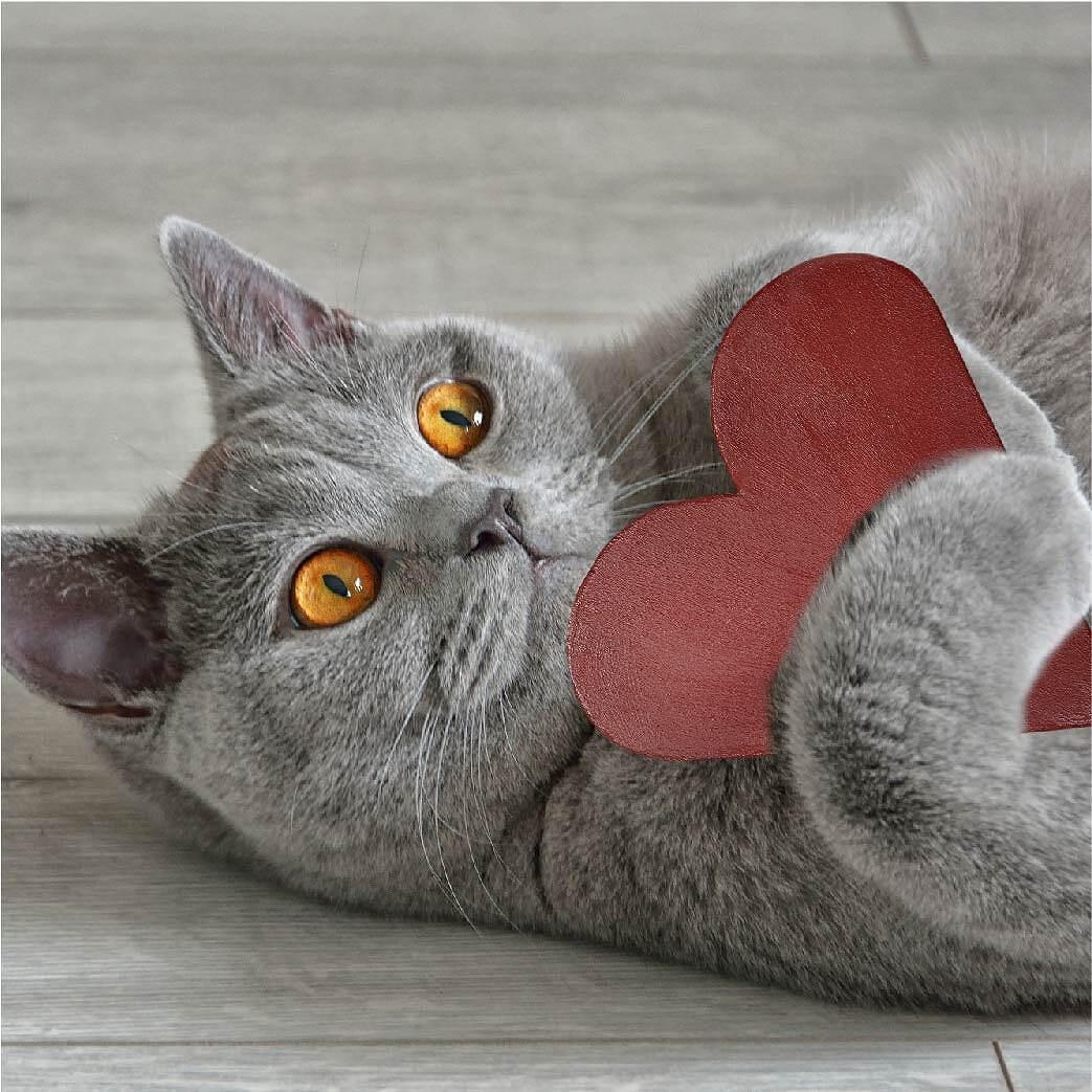 ドラネコ 黒 猫